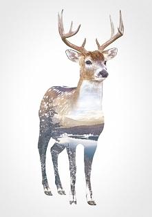 Deer<3