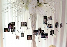 atrakcja weselna - drzewko ze zdjęciami