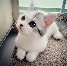 ten kot może mieć wszytko <3