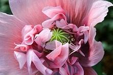 Piękny kwiat.