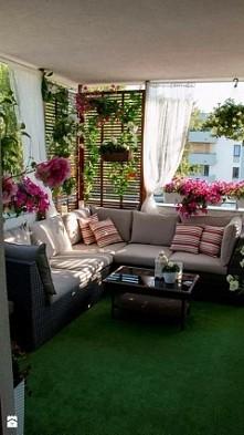 ogrod na balkonie :)