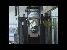 Czego producenci mięs nam nie mówią - Część 2