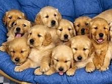 Pieski   #dog #psy #slodkiepsy #pieski #zwierzęta #pupile #wierniprzyjaciele