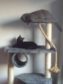 Remus i Leopold