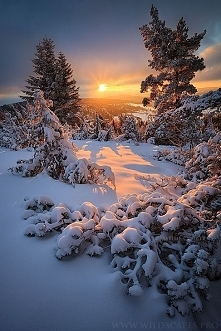 Snowy Sunrise - Forez, France