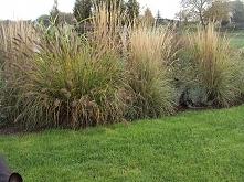 trawy...