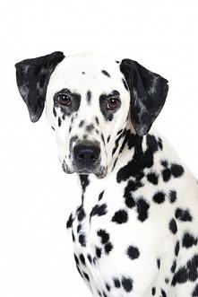 Najlepszy pies na świecie! :3