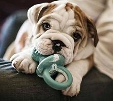 Uroczy psiak ;)