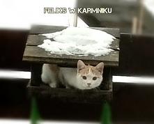 karmnik dla kota :)