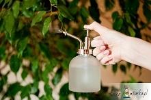 Rośliny uwielbiają wodę, ale trzeba wiedzieć, w jaki sposób umiejętnie ją doz...