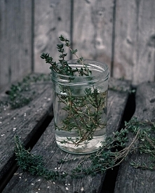 """Jeśli jet ci zimno, herbata cię ogrzeje.     Jeśli jest ci gorąco, herbata cię ochłodzi.     Jeśli jesteś pobudzony, herbata cię uspokoi.""          William Gladstone"