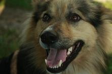 Dino- zwykły- niezwykły Pies! :)