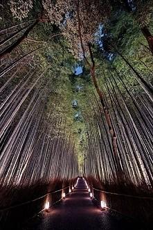ścieżka bambusowa-Japonia