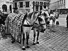 Konie zaprzężone do bryczki - nieodzowna atrakcja każdego miasta.