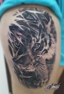 tygrys*