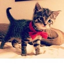 Jutro światowy dzień kota