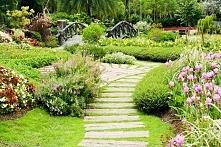 4 pożyteczne owady, które pomogą Ci zadbać o Twój ogród