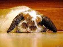 Poznaj 5 powodów chronicznego zmęczenia klikając w linka :)
