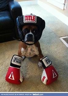 bokser to bokser :D