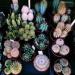 kaktusy :)