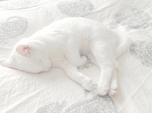 Śliczny koteł  :)