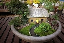 Mini ogród w doniczce <3