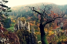 Skała Rękawica (woj. małopolskie)- zwana też Pięciopalcówką lub Białą Ręką – wybitna skała o charakterystycznym kształcie w Ojcowskim Parku Narodowym. Zbudowana jest z jurajskic...