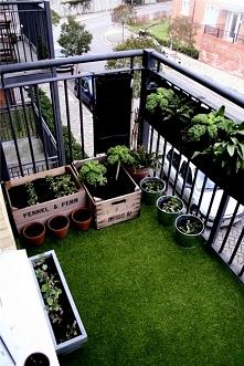 mój balkon w przyszłości,pełen zieleni :)) Balkon.