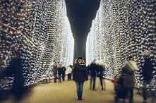 Iluminacje w Parku Oliwskim...