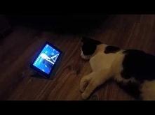 śmieszny kotek :)