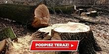 Podpisz  Niech Minister Środowiska usłyszy nasz silny apel o natychmiastowe o...