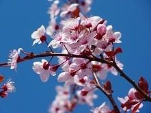 Wiosna ♥