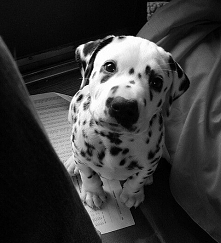 Uwielbiam zwierzęta, każde! Kiedyś chciałabym adoptować psa ze schroniska.
