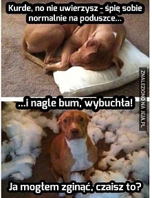 psia radocha, z przymrużeniem oka  ;)