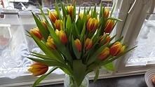tulipanki♡