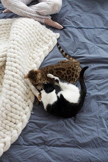 Kochajmy kotełki ^^