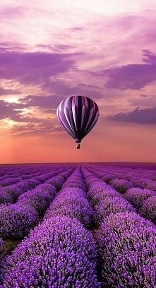 Lawendowe pola, Paryż <3