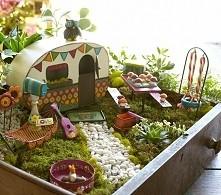 Mini ogrod hipisowskiej duszy :D