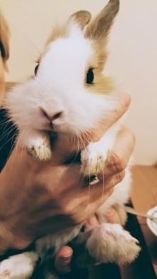 Mój kochany króliczek <3