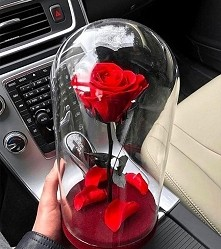 Najbardziej romantyczna róża ever! ♥