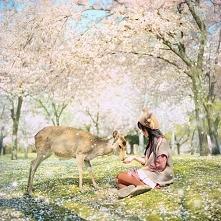 Nara Park - Japonia