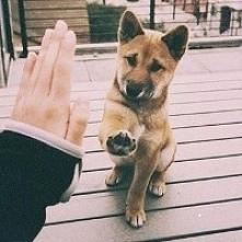♥♥♥ *-*  Mum, Dad, please *-*