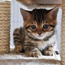 Cute Cat ♥