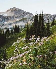 góry <3