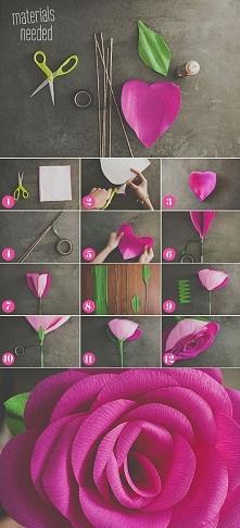 Olbrzymie róże :)