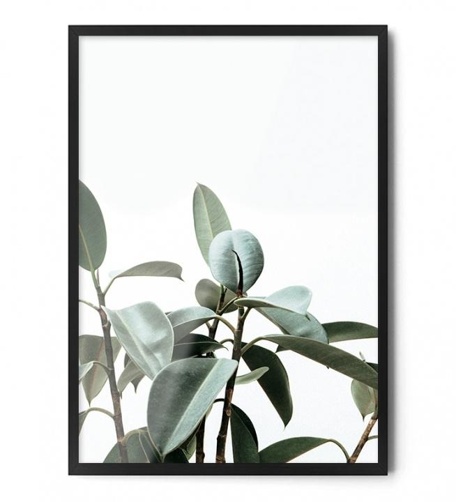 Plakat FIGOWIEC  Dostępny w rozmiarach: A3 40/50 cm 50/70 cm 70/100 cm +inne na życzenie