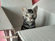 Kotek figurka z wełny. Więcej zdjęć na blogu :)