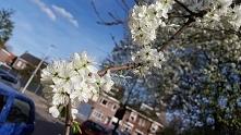 wiosna ;)