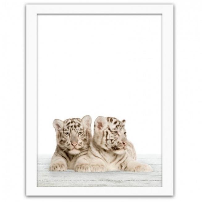 Dzisiaj zaglądamy do dzikiej dżungli i prezentujemy Wam obrazy w ramie z passepartout przedstawiające młode zwierzęta. Zobacz ile słodyczy tkwi w wizerunku drapieżnych kociąt. To idealna ozdoba wnętrz dla małych i dużych miłośników przyrody.  Nowoczesny obraz w ramie z dwoma małymi tygrysami Idealny dekoracja do pokoju rodzeństwa lub maluchów, które Tworzą zgrany team  - tak jak młode tygryski, które lubią czasami napsocić. Tygrysiątka tylko wyglądają niewinnie i potrafią pokazać pazurki.  Graficzne obrazki z małymi drapieżnikami to doskonałe dopełnienie pokoju dziecka i  nastolatka,  Masz do wyboru również opcję  tego samego obrazu w ramie wzbogaconą o  kartonowe passepartout, które podkreśla wszelkie atuty kompozycji i nadaje jej klasyczny wygląd.  grafiki w stylu wild wpisują się w aktualne trendy dekoratorskie, realistyczny nadruk w soczystych kolorach sprawia, że wizerunek zwierząt nabiera niepospolitej głębi, doskonały dodatek do wszelkich czarno - białych i neutralnych aranżacji, Stonuje również wnętrze utrzymane w jaskrawych kolorach, Jeżeli interesują cię motywy zwierzęce - zobacz nasze obrazy drukowane na płótnie z drapieżnymi zwierzętami  Gdzie  go powiesić ? nad sofą, nad kominkiem, w biurze, w salonie, nad schodami.... pojedynczo, lub w zestawie z innymi obrazami w ramie podobnymi tematycznie. Podaruj jako prezent - produkty dekoracyjne sprawią ogromną radość bliskiej osobie.  Obrazy w ramie, doskonale wypełnią pustą ścianę, tworząc niebanalną kompozycję. Bez bałaganu, bez malowania i sprzątania w prosty sposób możesz sprawić, że Twój dom będzie wyglądał jeszcze atrakcyjniej. Wybierz Swój ulubiony wzór spośród tysięcy obrazów. Zobaczcie także Nasze inne produkty takie jak plakaty w ramie i obrazy Deco Panel, Deco Block. Cechy i atuty obrazu w ramie na ścianę z drapieżnymi tygrysami wydruk w uniwersalnym rozmiarze, produkt gotowy do zawieszenia - wyposażony w funkcjonalną i solidną zawieszkę, możliwość doboru pasujących obrazów w innych kategoriach temat