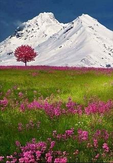 Szwajcaria, Alpy